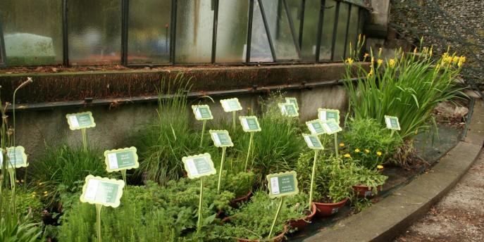 I semi ambasciatori di biodiversità