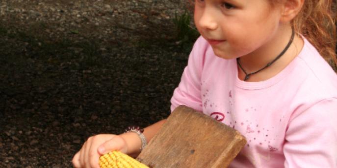 Il granoturco: dalla terra alla tavola