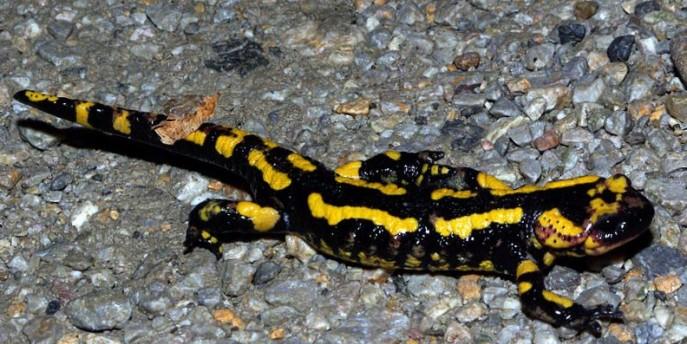Scopri la natura del Parco di San Tomaso con BioBlitz 2018
