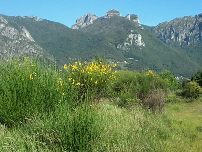 Con BioBlitz Lombardia al PLIS San Pietro al Monte - San Tomaso