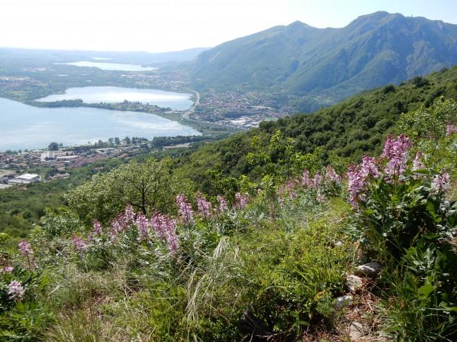 Scopriamo insieme la natura e i paesaggi del Monte Barro